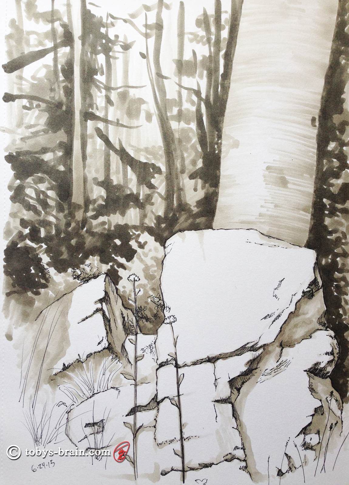 Toby-Gray-rock-and-birch-tree