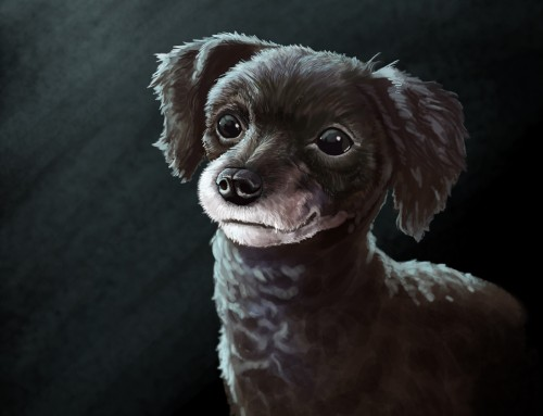 Pet Portraits: Coco