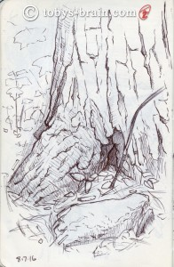 This beautiful tree was right outside my tent. I would have loved to have had more time on this sketch.