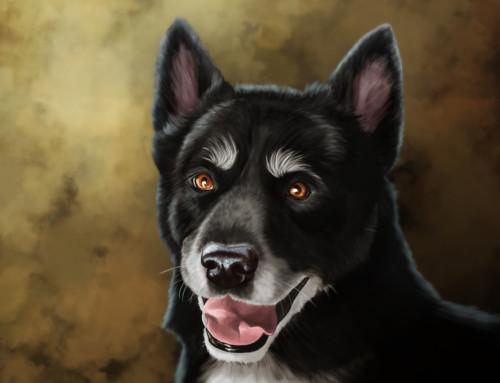 Pet Portraits: Jasmine
