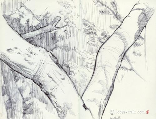 Moleskin Sketch: Tree on North Pac