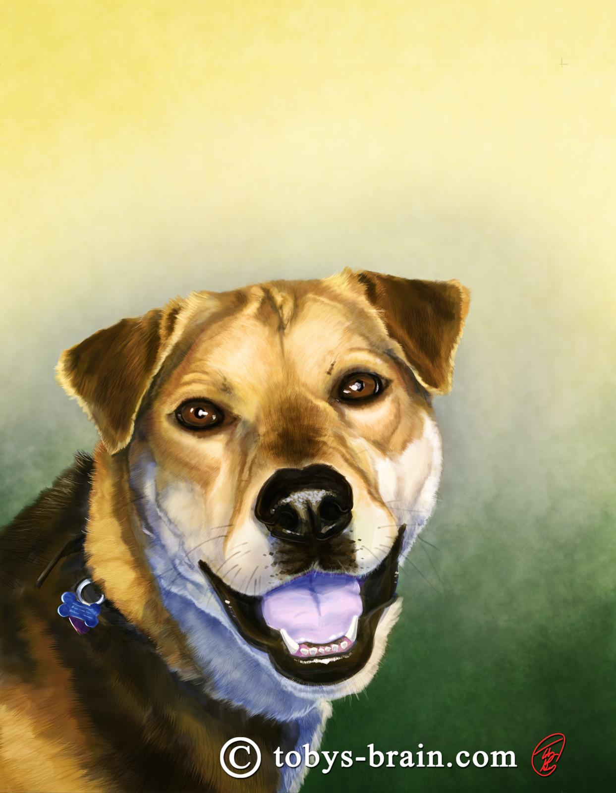 Pet Portraits: Quegan